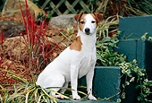 DOG 02 CE0083 01