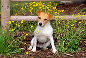 DOG 02 CE0084 01