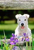 DOG 02 CE0085 01