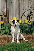 DOG 02 CE0087 01