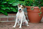 DOG 02 CE0088 01