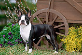 DOG 02 CE0092 01