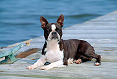 DOG 02 CE0093 01