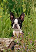 DOG 02 CE0098 01