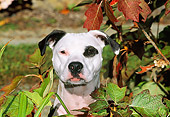 DOG 02 CE0103 01
