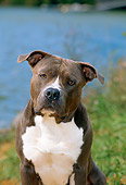 DOG 02 CE0104 01