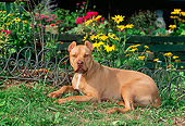 DOG 02 CE0108 01