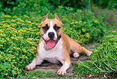 DOG 02 CE0109 01
