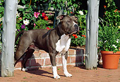 DOG 02 CE0114 01