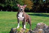 DOG 02 CE0115 01