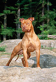 DOG 02 CE0116 01