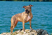 DOG 02 CE0117 01