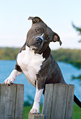 DOG 02 CE0118 01