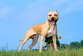 DOG 02 CE0119 01