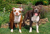 DOG 02 CE0122 01