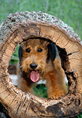 DOG 02 CE0125 01