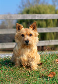 DOG 02 CE0127 01