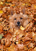 DOG 02 CE0128 01