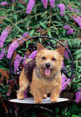 DOG 02 CE0129 01