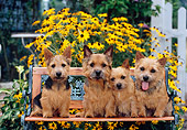 DOG 02 CE0131 01