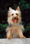 DOG 02 CE0133 01