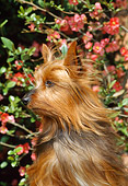 DOG 02 CE0137 01