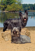DOG 02 CE0144 01