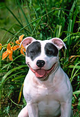 DOG 02 CE0145 01