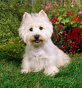 DOG 02 FA0002 01