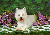 DOG 02 FA0003 01