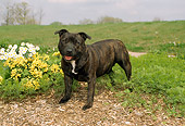 DOG 02 FA0005 01