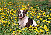 DOG 02 FA0006 01