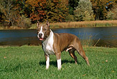 DOG 02 FA0008 01