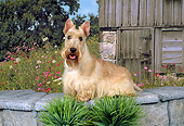 DOG 02 FA0012 01