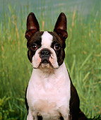 DOG 02 FA0015 01