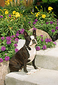 DOG 02 FA0016 01