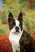 DOG 02 FA0017 01