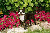 DOG 02 FA0018 01