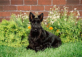 DOG 02 FA0023 01