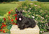 DOG 02 FA0024 01