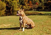 DOG 02 FA0028 01