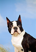 DOG 02 FA0034 01