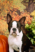 DOG 02 FA0035 01
