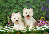 DOG 02 FA0037 01