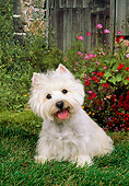 DOG 02 FA0041 01
