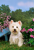 DOG 02 FA0042 01