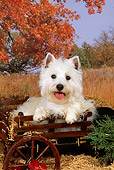 DOG 02 FA0044 01