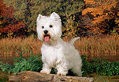 DOG 02 FA0045 01