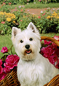 DOG 02 FA0046 01