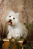 DOG 02 FA0048 01
